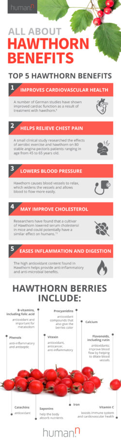 hawthorn berry benefits infographic 1