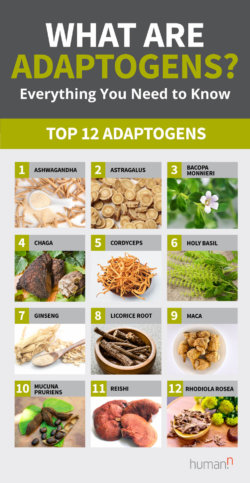 top-adaptogens