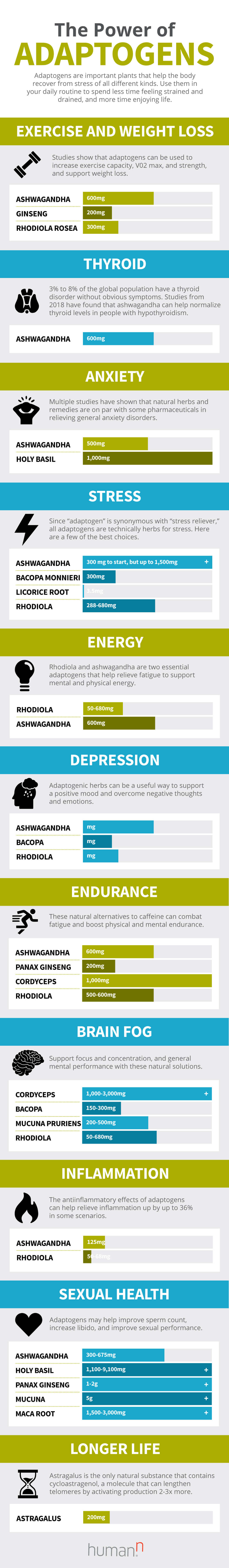 Adaptogens Infographic