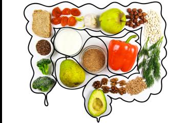 gut diet plan