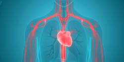 circulatory-system-function-1